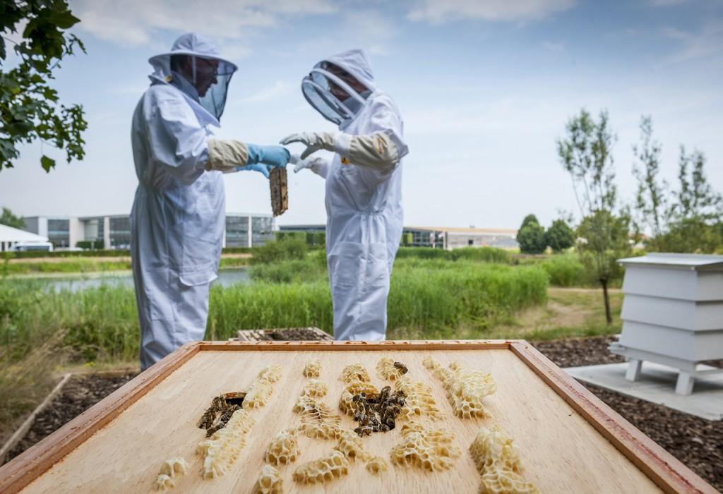 롤스로이스모터카_'세계 꿀벌의 날' 맞아 꿀벌 보호 동참_이미지1