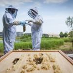 롤스로이스모터카, '세계 꿀벌의 날' 맞아 꿀벌 보호 동참