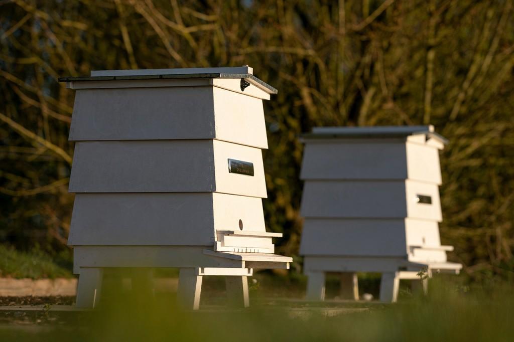 롤스로이스모터카_'세계 꿀벌의 날' 맞아 꿀벌 보호 동참_이미지2
